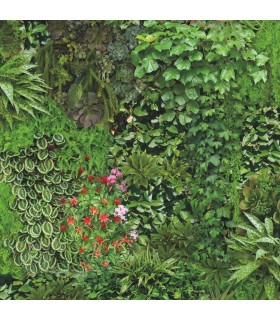 ON1670 - Outdoors In Wallpaper by York - Living Wall